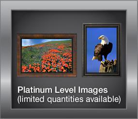 Platinum Level Images