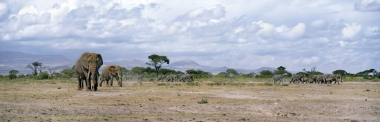 Amboseli's Long Journey