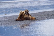 The Waiting Game - Brown Bears