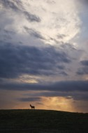 Dakota Skies - Pronghorn
