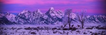 Daybreak on the Tetons - Mule Deer