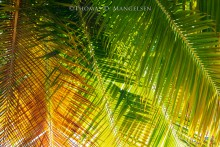 A Fabric of Wild Fronds   Open Edition Art
