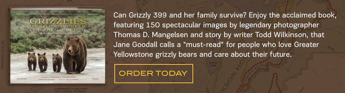 A dramatic grizzly bear story of life, death, and perilous survival involving humans and the most famous bear family on earth.