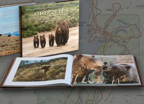Grizzly Bear 399