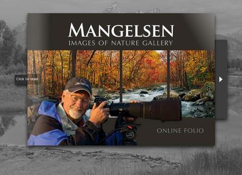Online Image Folio